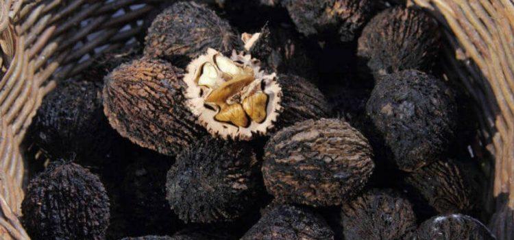 Tinktura crnog oraha – prirodno čišćenje organizma