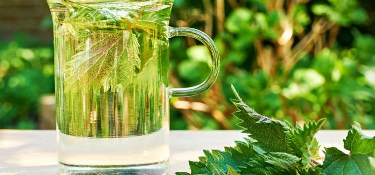 Narodni lek koji regeneriše celo telo: Jedna šolja ovog čaja leči anemiju, snižava šećer u krvi i čuva zdravlje bubrega!